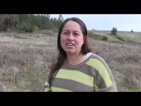 Reforestación en Putú 2020 Región de El Maule